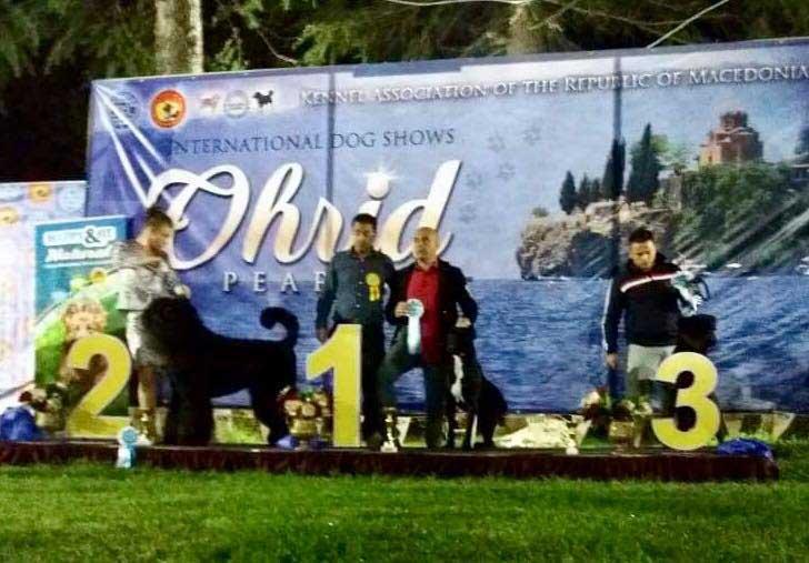 OHRID 4xCACIB kiállítás